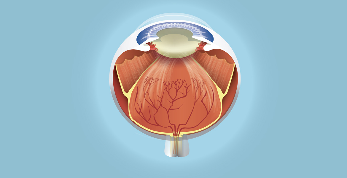 medical illustration of the human eye